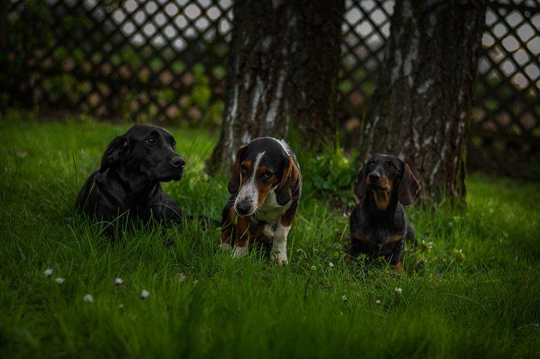 Jagd ohne Hund ist Schund...