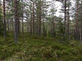 ... und dichte Wälder