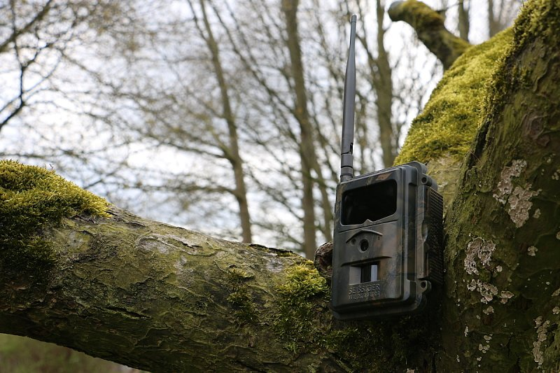 Des Jägers Recht: Leitfaden zum rechtskonformen Wildkameraeinsatz