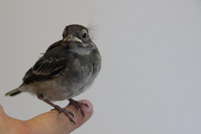 Erste Hilfe für Wildvögel
