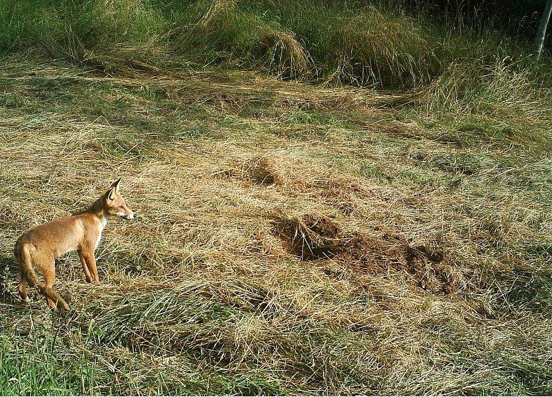 Die Fuchsuhr steht niemals still