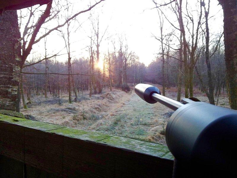 Recht: Jagen mit Schalldämpfern - In Hessen tut sich was