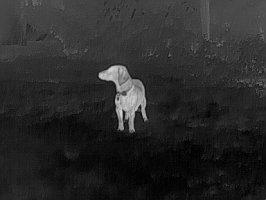 Hund, ca. 10 m auf einer Wiese