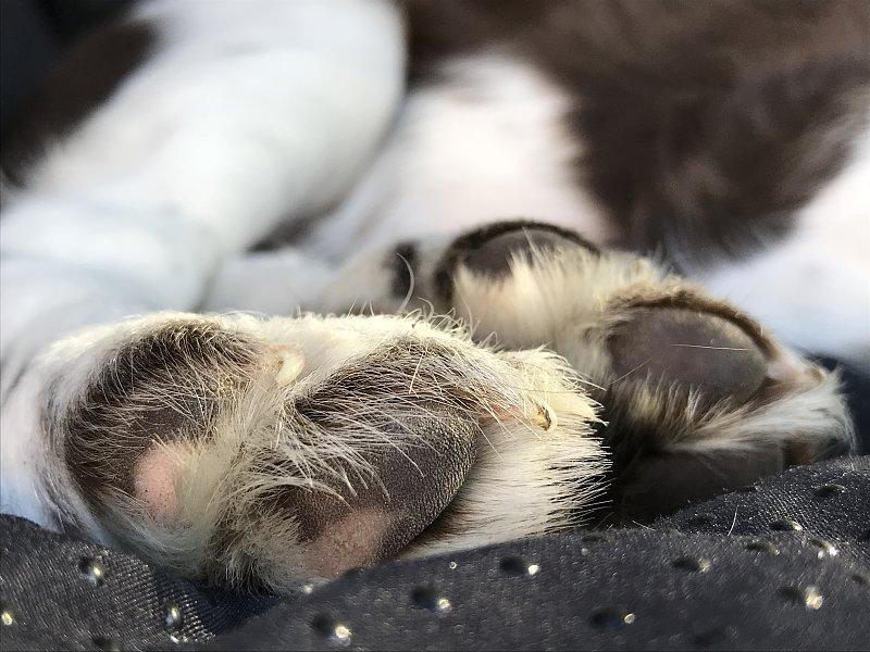 Erwerb eines Jagdhundewelpen – nicht nur eine Herzensangelegenheit