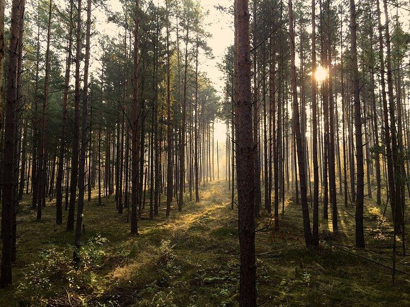 Tracker: Neues aus Finnland