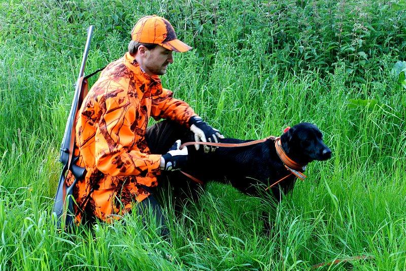 Recht: Ist man als Stöberhundeführer bei der Schwarzwilddrückjagd eigentlich unfallversichert?