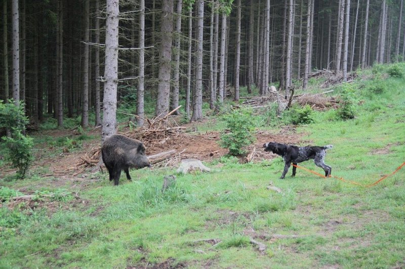 Wildschweingatter - wofür und wozu?