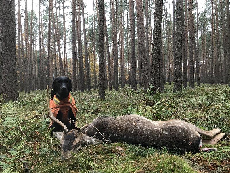 Überjagende Stöberhunde bei Ansitzdrückjagden – Unterlassung oder Duldung