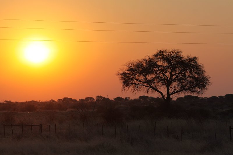 Afrikanische Wiederholungstäter