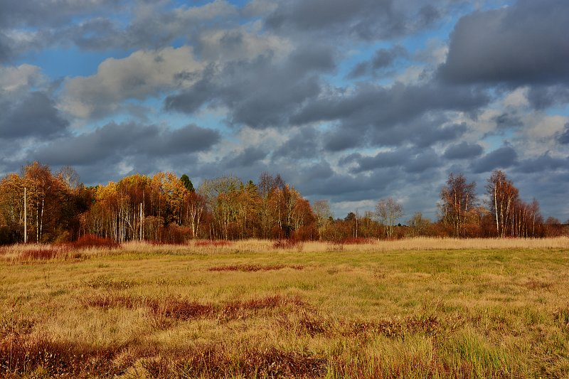 Elchjagd in Estland