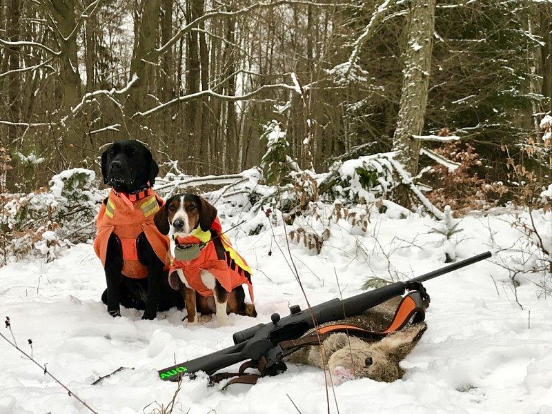 "Praxistest: ""Hundenavi"" - Eine Weste für Hunde"