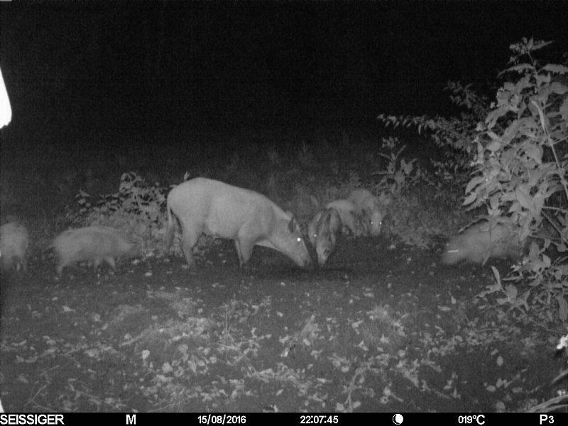Wildbeobachtungskameras im Test: Drei Augen sehen mehr als zwei