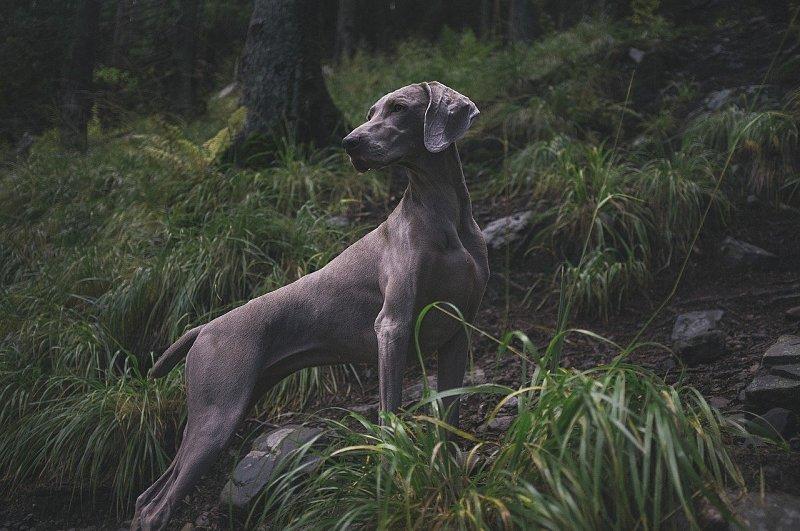 Die Brauchbarkeitsprüfung für Jagdhunde – Was muss man denn da alles machen?