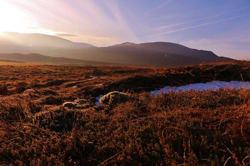 Kahlwild in den Highlands