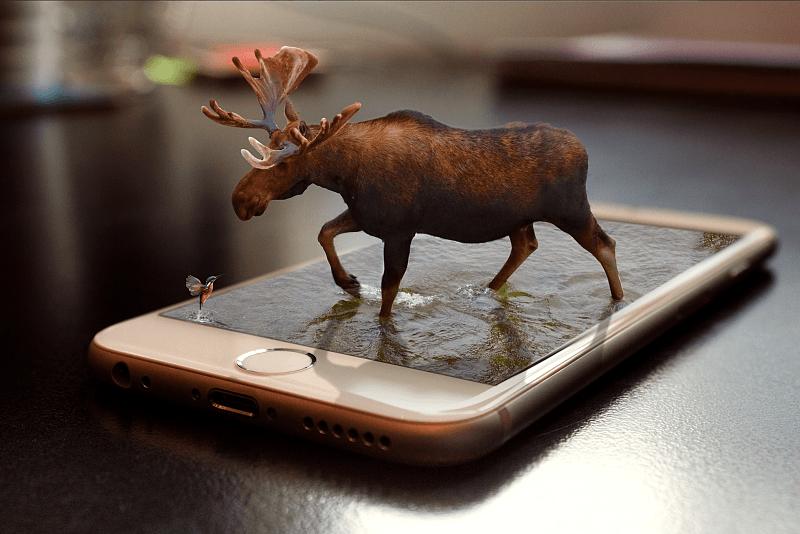 487. Anzahl Jagd-Apps 2019 – Tendenz steigend.