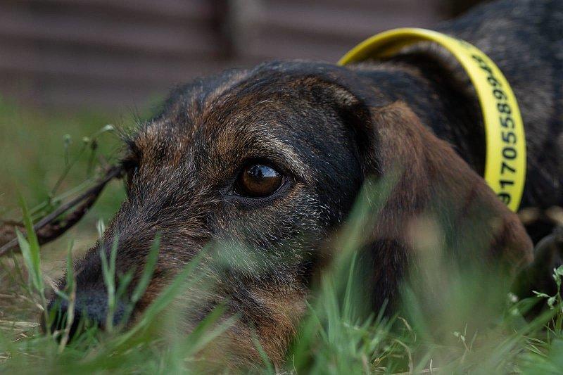 Jagdhaftpflichtversicherung - Besteht eigentlich noch Versicherungsschutz für einen nicht mehr jagdtauglichen Hund?